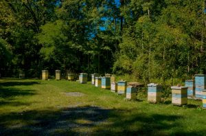 Hives being readied for Winter
