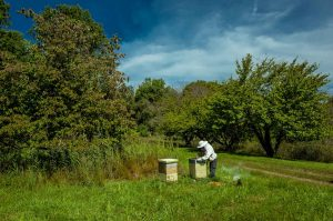 In one of our Apiaries