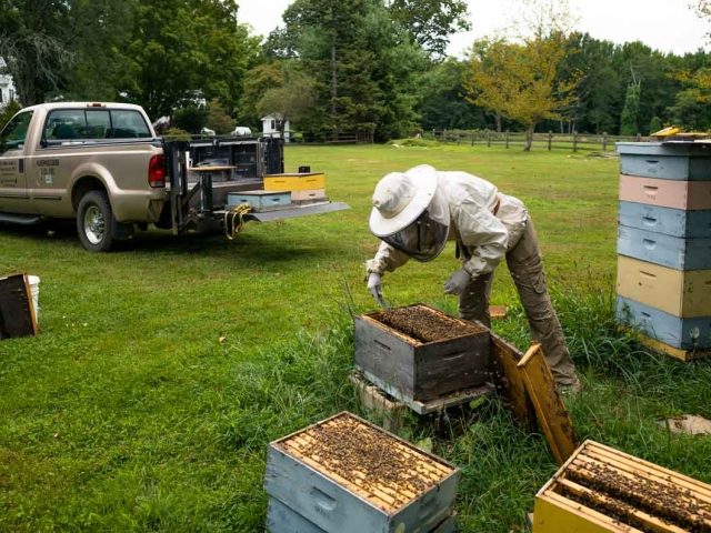 Get a hive ready for the winter