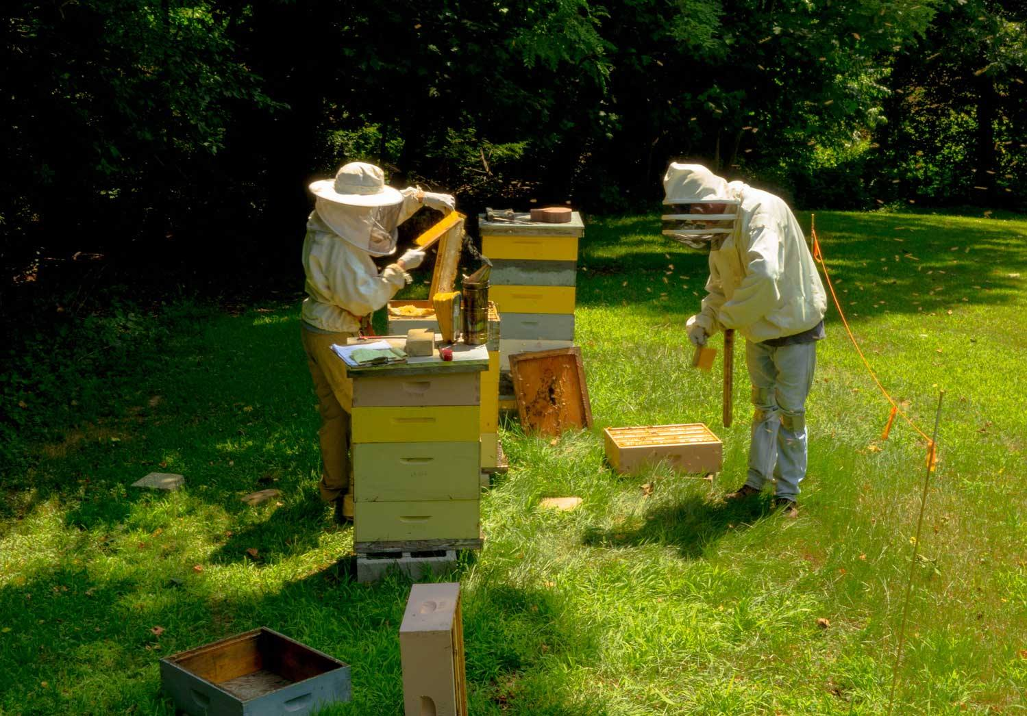 Our Bees Have Rewarded Us With Extra Honey