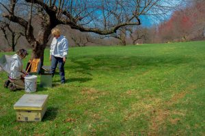 In the Apple orchard